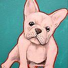 White French Bulldog by Amanda  Shelton