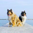 dogs on track by BellatrixBlack