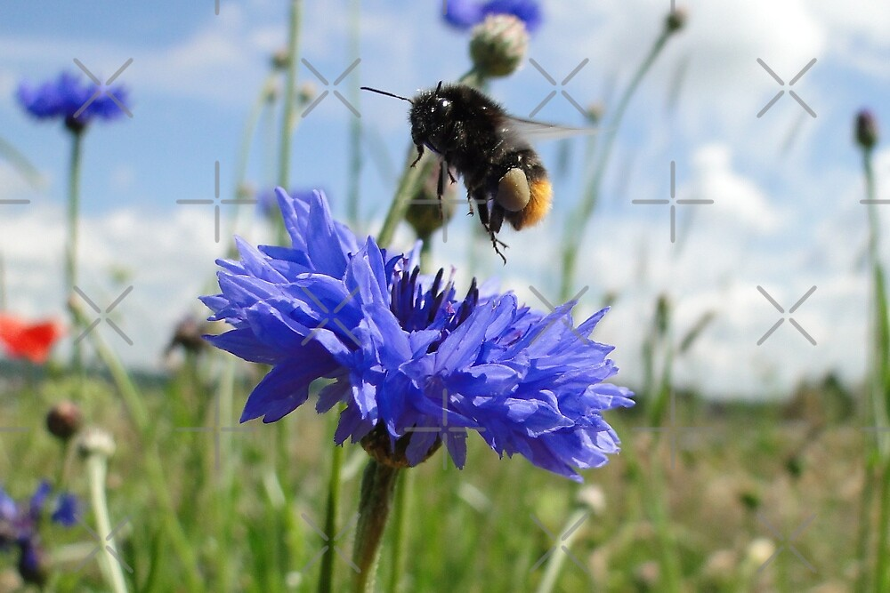 Flight Bee Incoming by Barrie Woodward