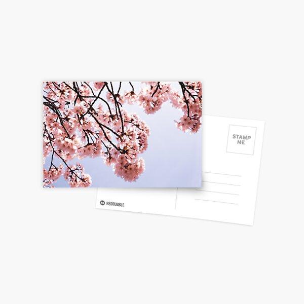 Sunny Sakura Postcard