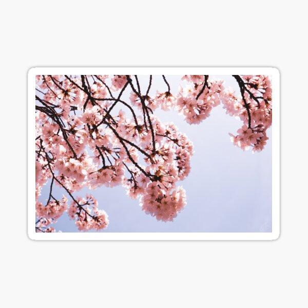 Sunny Sakura Sticker
