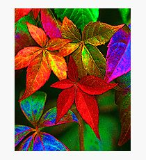 Multi coloured leaves Photographic Print