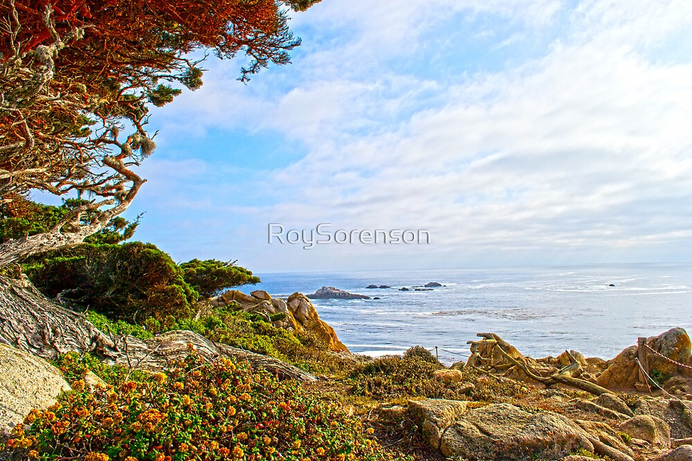 Point Lobos State Park, California by RoySorenson