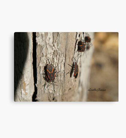 Boxelder Bug Congregation Canvas Print