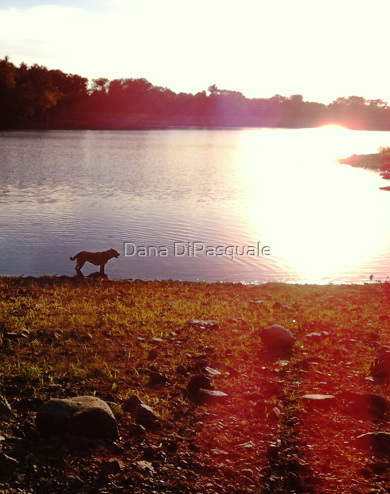 The Simple Days by Dana DiPasquale