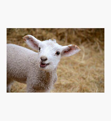 Little Lamb Photographic Print