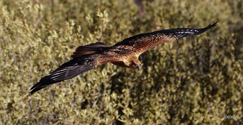 """Brown Kite in Flight"" by jonxiv"