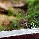 Someitme it Rains by David Haworth