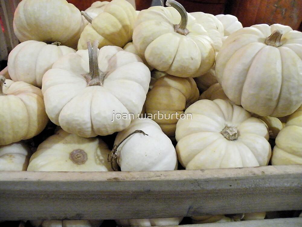 White Pumpkins by joan warburton