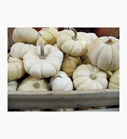 White Pumpkins Photographic Print