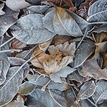 Frozen Leaf Pile in November by darkesknight