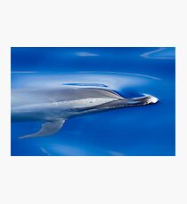 Spotted Dolphin Photographic Print