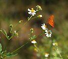 Butterfly on Widflower by Sandy Keeton