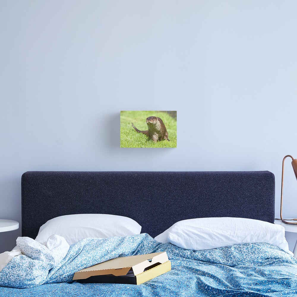 Curious otter Canvas Print