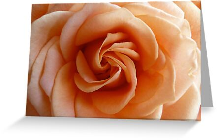 Peach Rose - 2:3 by Janelle Wourms