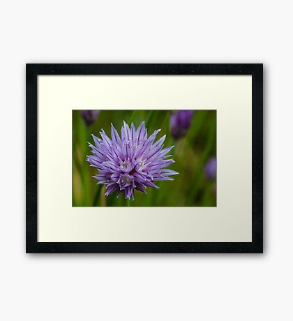 Pretty purple Framed Print