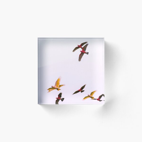 The four winged Corella Acrylic Block