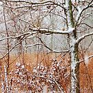 November Snow by lorilee
