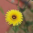The Humble Thistle by R-Summers