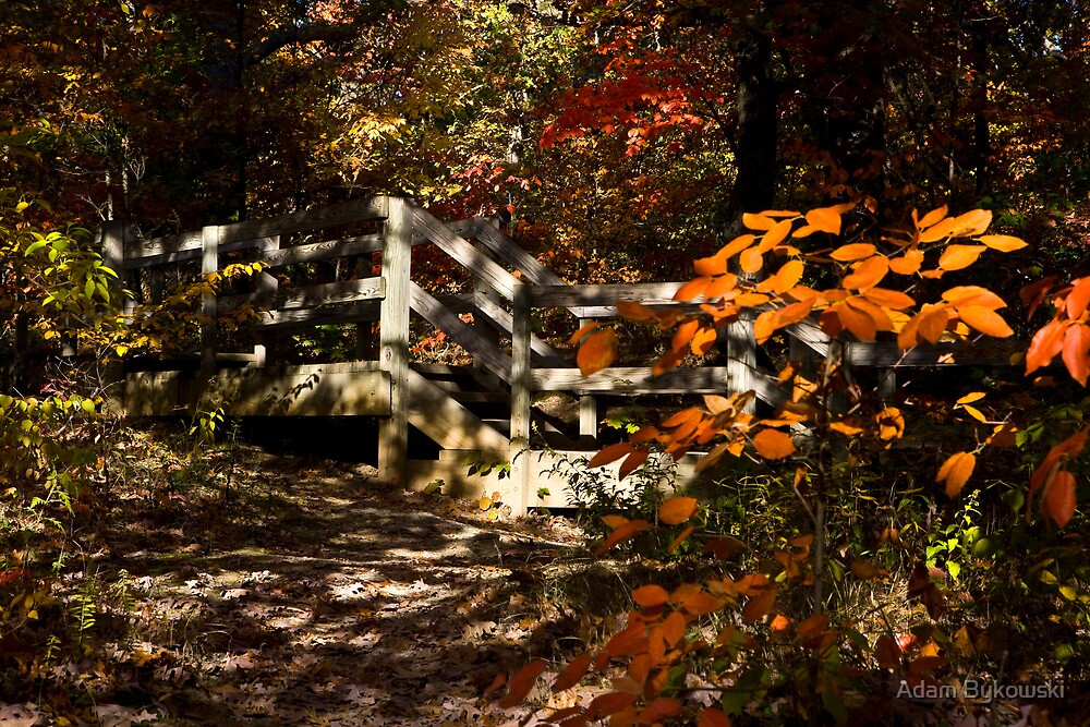 Autumn Shade by Adam Bykowski