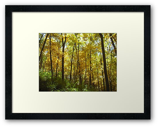 The Woods in Autumn by AJBPhotography
