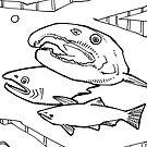 Coho salmon, coloring book page by Gwenn Seemel