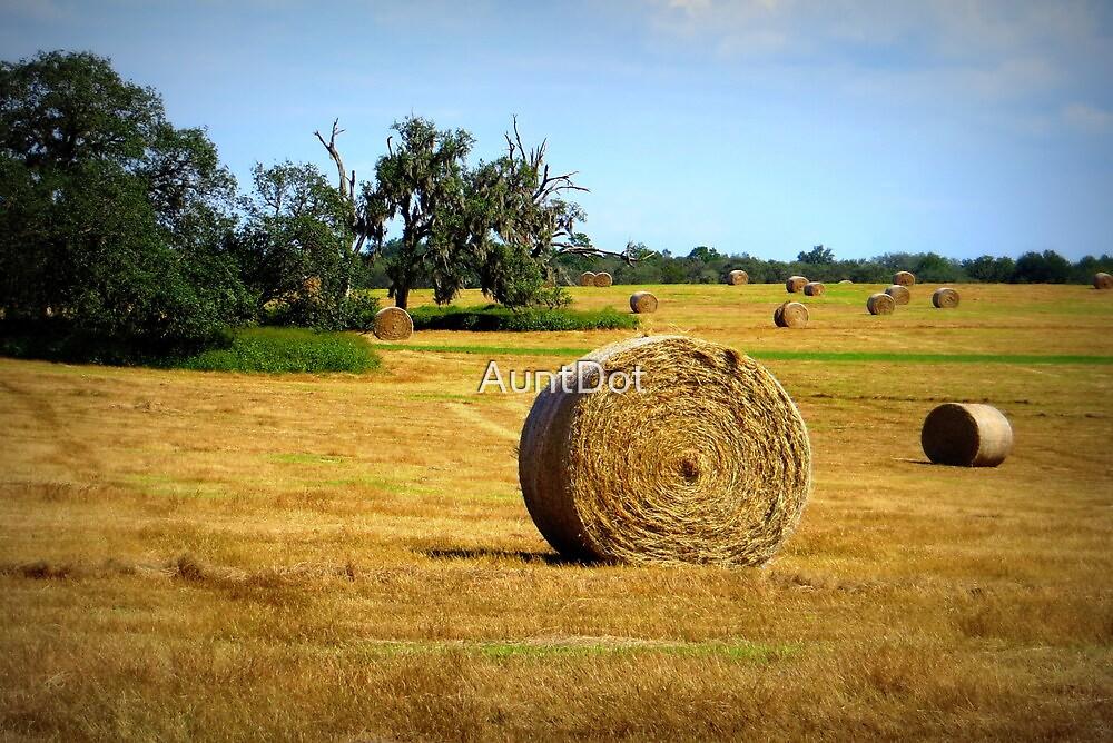 Hay by AuntDot