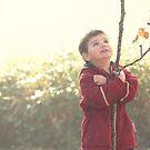 The Little Tree-Hugger by Tracy Friesen