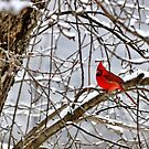Big red by Penny Fawver