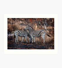 Burchells zebra pair. Art Print