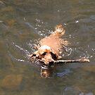 Jessie Learns to Swim & Fetch by aussiebushstick