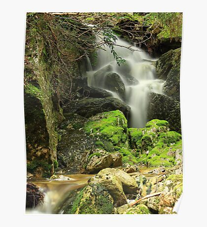 Ballroom Forest Falls, Cradle Mt , Tasmania , Australia Poster