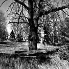 Ghostly Picnic by Scott Hendricks
