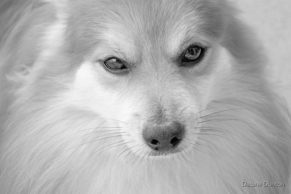 Maverick Little Fox 4 by Dawne Dunton