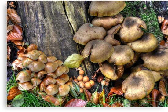 fungi in HDR by Nicole W.