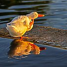 Sunset Itch by George I. Davidson