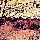Wide Open Spaces II by Vintageskies