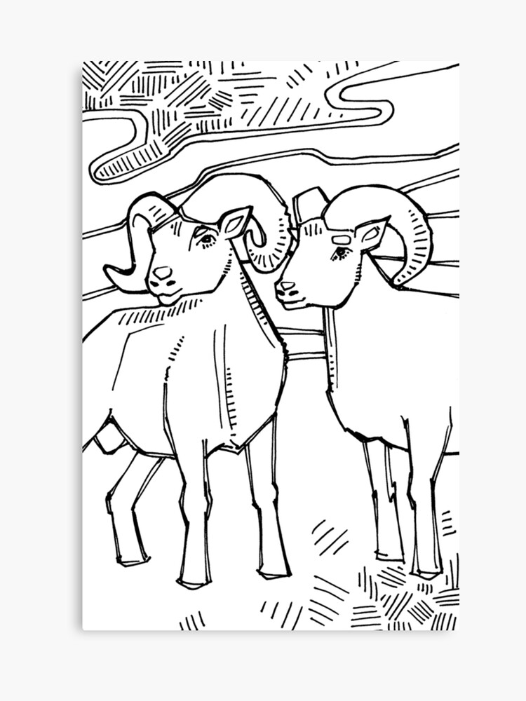 Bighorn sheep, coloring book page | Canvas Print