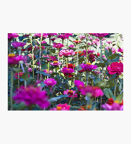 Flower Field Photographic Print