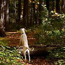 Watcher in the Woods by Jan Cartwright
