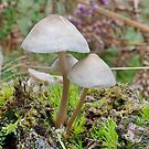 Angels Bonnet (Mycena Angelica)  by relayer51