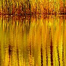 Autumn Water Reflection Abstract II by Valerie Rosen