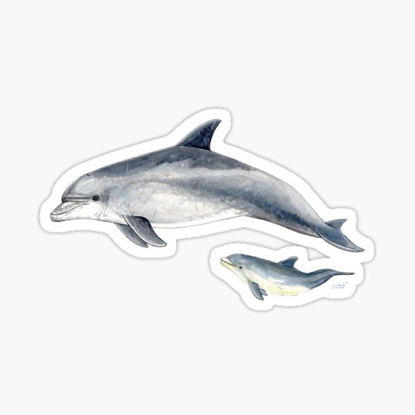 Bottlenose dolphin Sticker