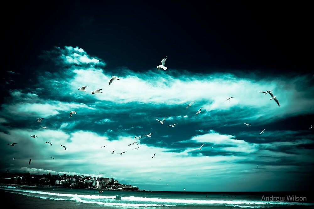 Birds at Bondi Beach by Andrew Wilson