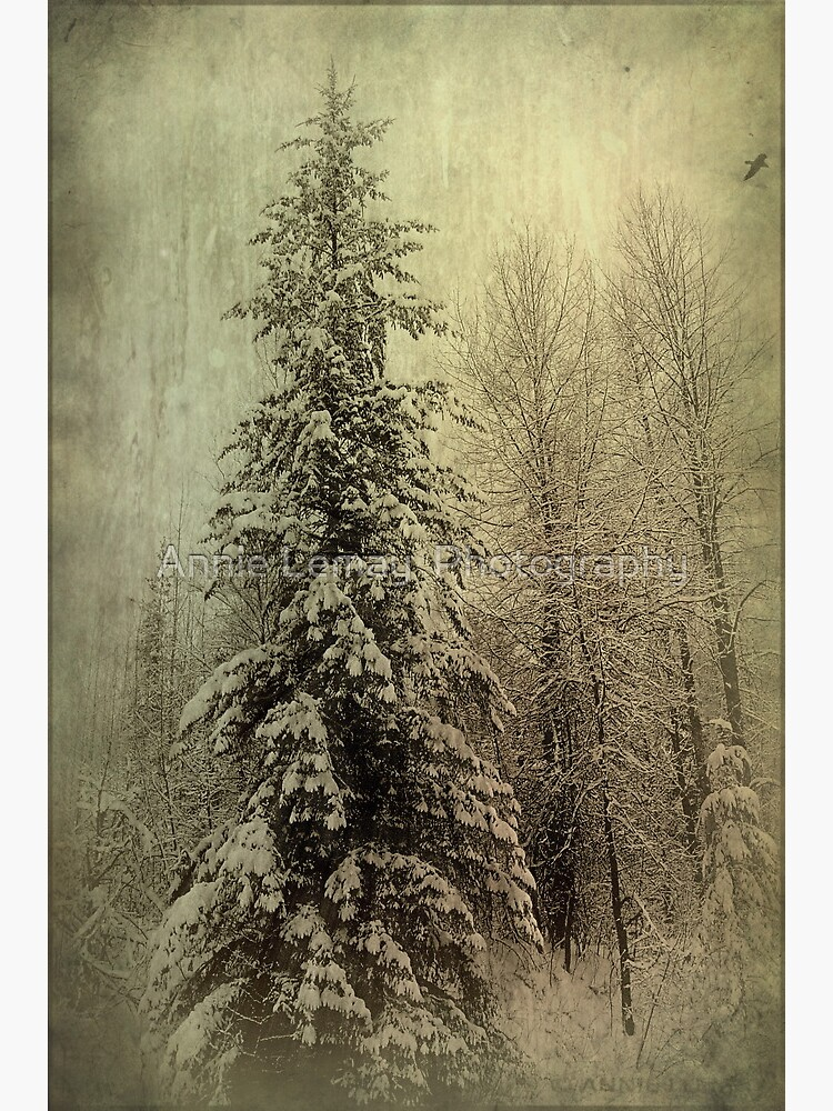 Winter by ajlphotography
