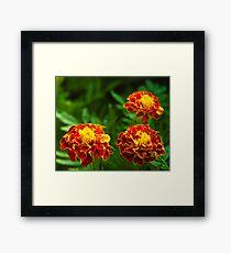 3 flowers in a frame Framed Print