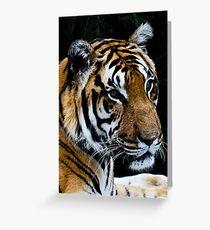 Tiger head shot Greeting Card