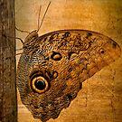 CALIGO by Charles Dobbs Photography