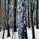 'Woods in Snow' by Jerry Kirk