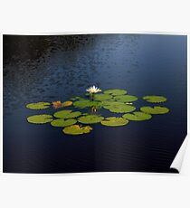 Pond Treasures ~ Part Two Poster